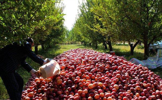 خاتمه واردات سیب نوروزی به خوزستان
